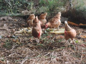 16-six-poules