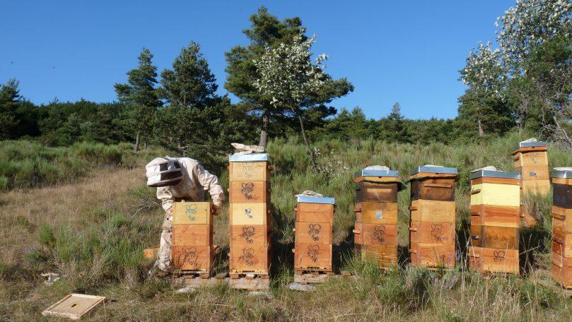 Bzzz,un rucher participatif !