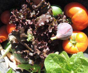recolte-de-legumes