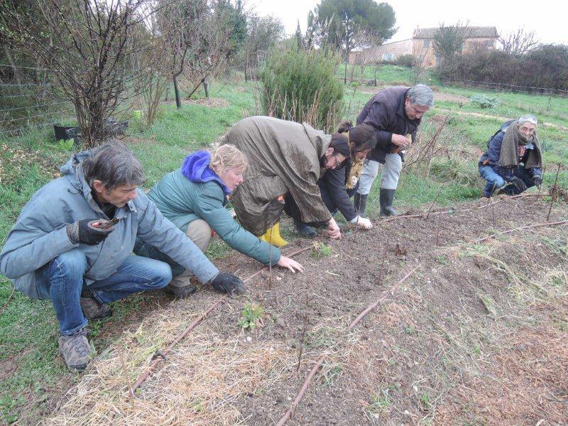 Une année au jardin, au ras du sol