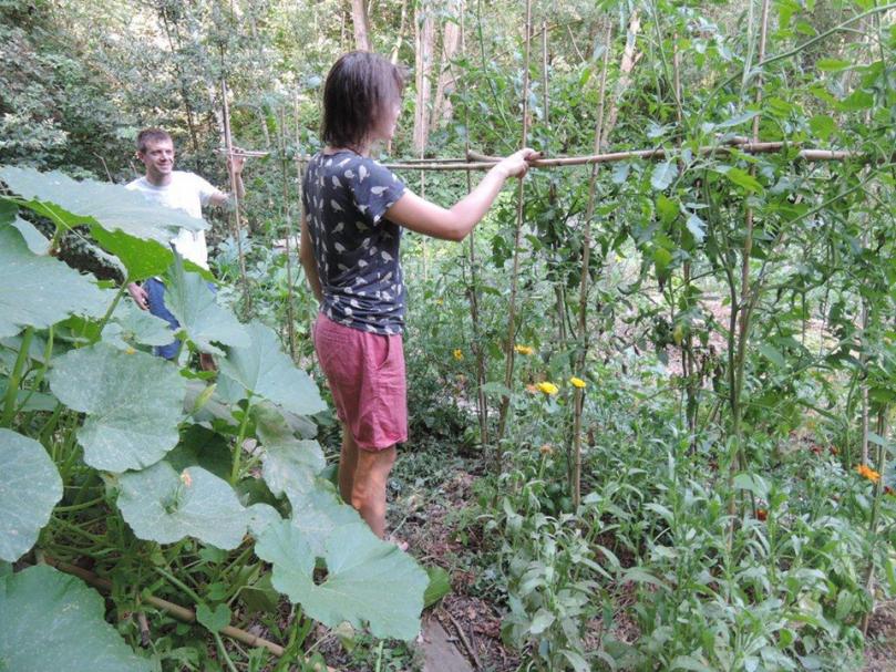 Potager du Vallon : La naissance d'un potager en permaculture